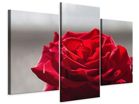Leinwandbild 3-teilig modern Rote Rosenblüte