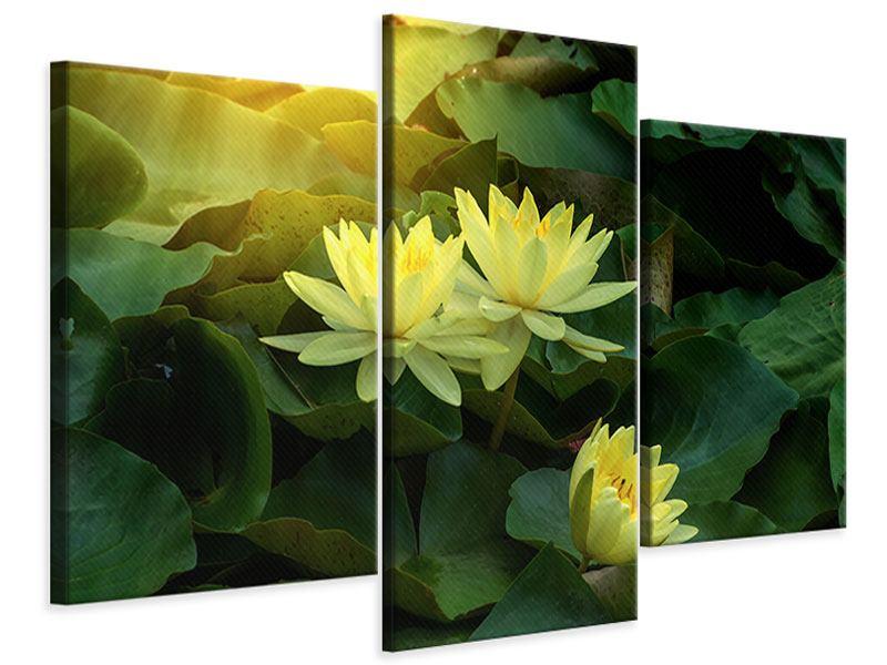 Leinwandbild 3-teilig modern Wilde Lotus