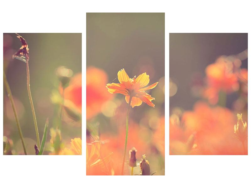 Leinwandbild 3-teilig modern Blütenpracht