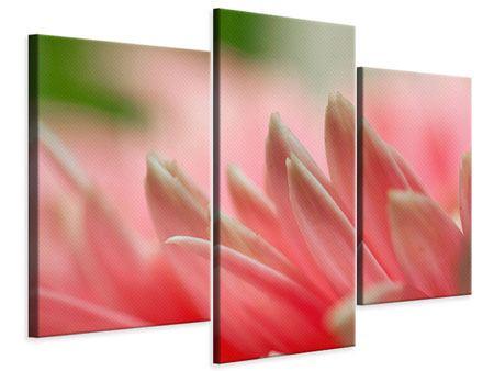 Leinwandbild 3-teilig modern Close Up einer Blüte