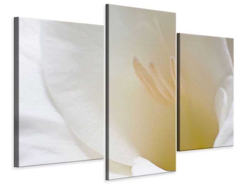 Leinwandbild 3-teilig modern In einer Blüte