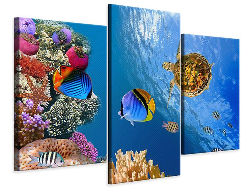 Leinwandbild 3-teilig modern Fisch im Wasser