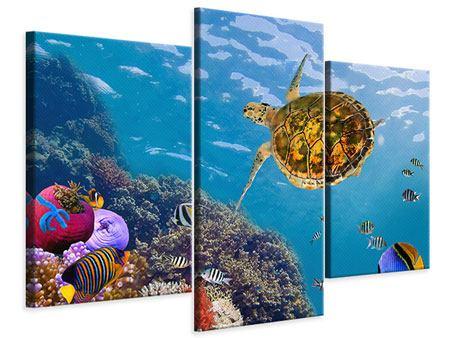 Leinwandbild 3-teilig modern Die Wasserschildkröte