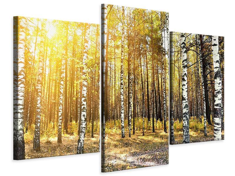 Leinwandbild 3-teilig modern Birkenwald