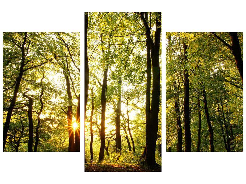 Leinwandbild 3-teilig modern Sonnenuntergang zwischen den Bäumen