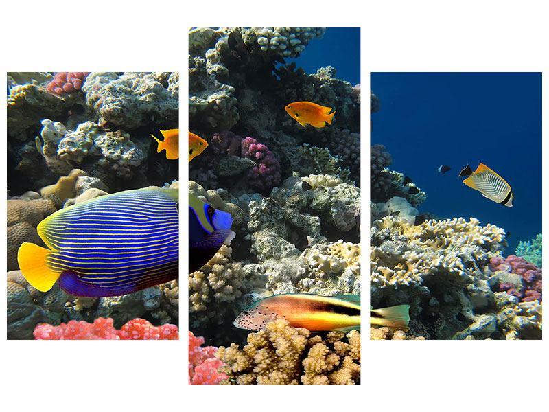 Leinwandbild 3-teilig modern Das Aquarium