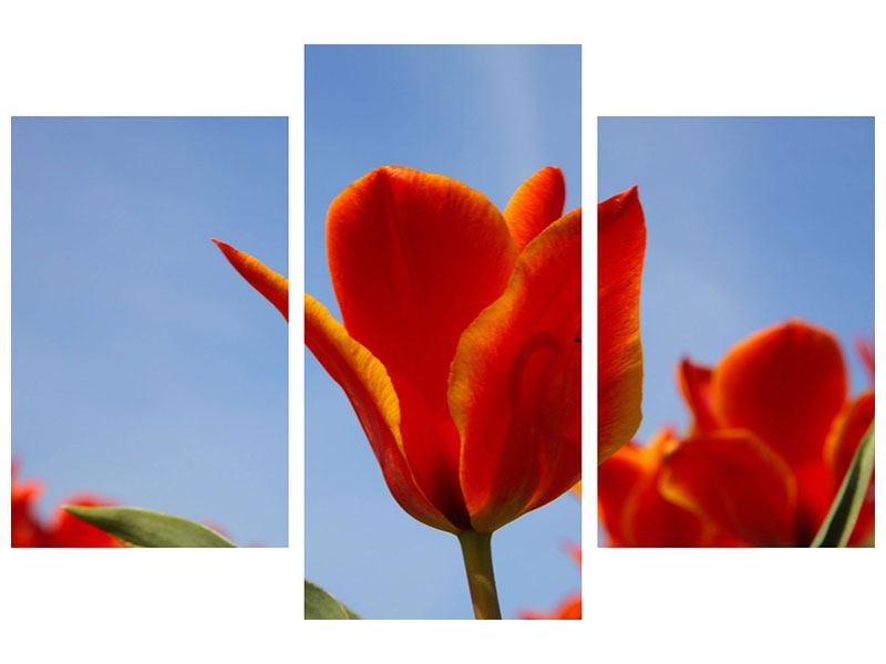 Leinwandbild 3-teilig modern Rote Tulpen in XXL