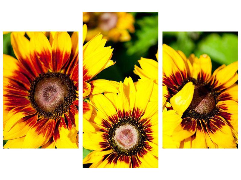 Leinwandbild 3-teilig modern Reife Sonnenblumen