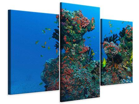 Leinwandbild 3-teilig modern Die Welt der Fische