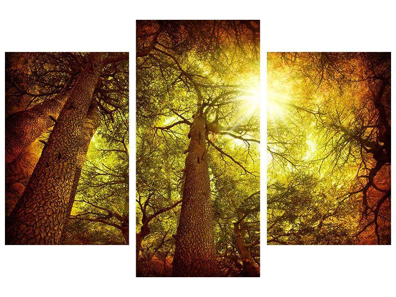 Leinwandbild 3-teilig modern Cedar Baum