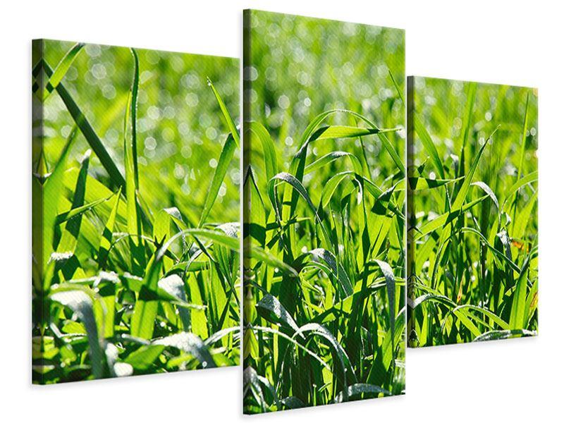 Leinwandbild 3-teilig modern Sonniges Gras