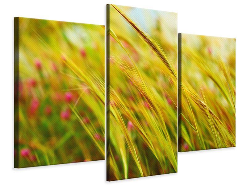 Leinwandbild 3-teilig modern Das Weizenfeld