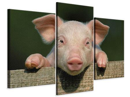 Leinwandbild 3-teilig modern Schweinchen Namens Babe
