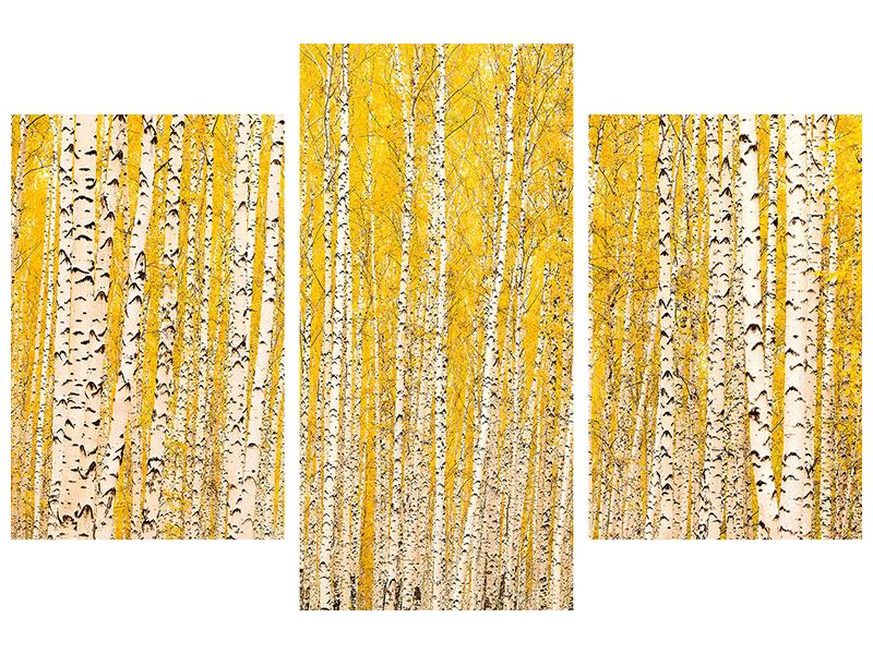 Leinwandbild 3-teilig modern Der Birkenwald im Herbst