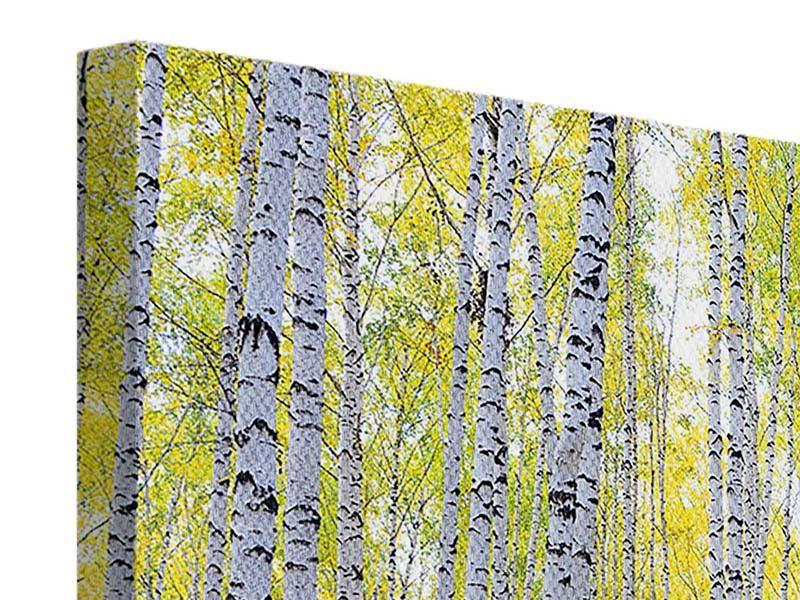 Leinwandbild 3-teilig modern Herbstlicher Birkenwald