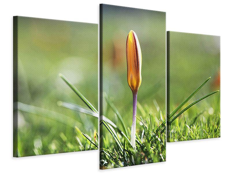 Leinwandbild 3-teilig modern Die Blütenknospe