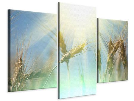 Leinwandbild 3-teilig modern König des Getreides