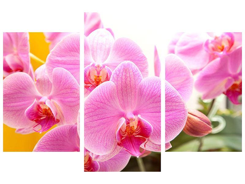 Leinwandbild 3-teilig modern Königliche Orchideen
