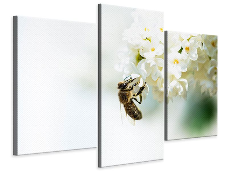 Leinwandbild 3-teilig modern Die Hummel und die Blüte