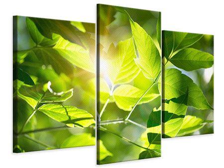 Leinwandbild 3-teilig modern Es grünt so grün