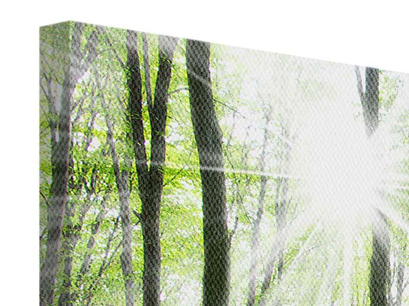 Leinwandbild 3-teilig modern Magisches Licht in den Bäumen
