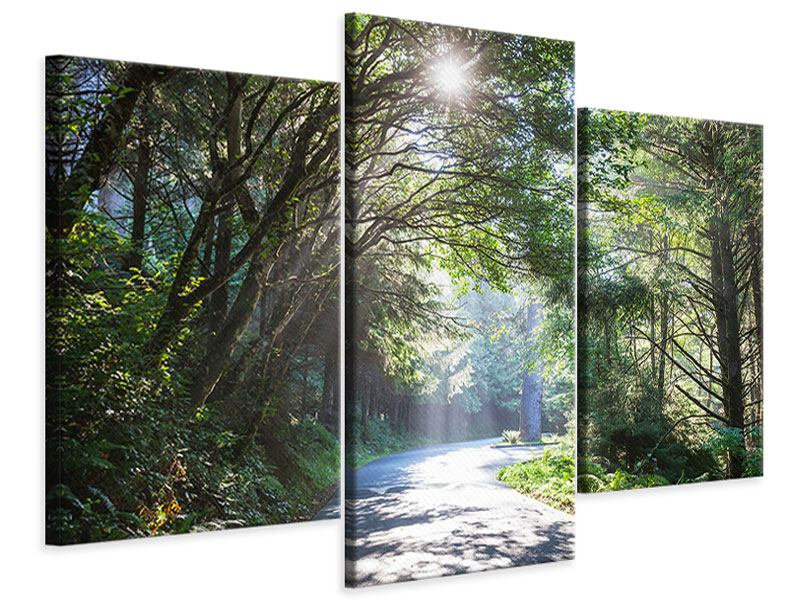 Leinwandbild 3-teilig modern Sonniger Waldweg