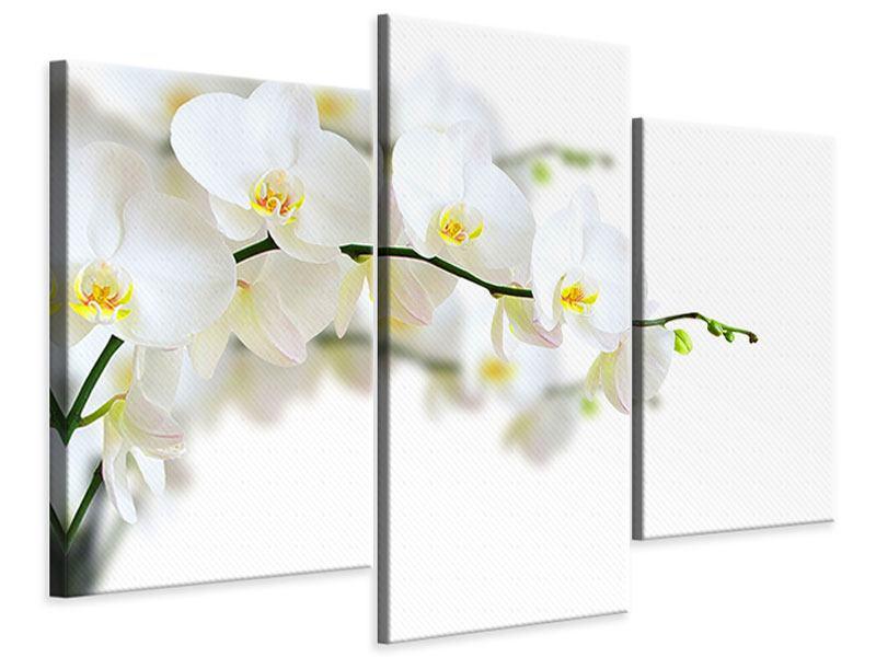 Leinwandbild 3-teilig modern Weisse Orchideen
