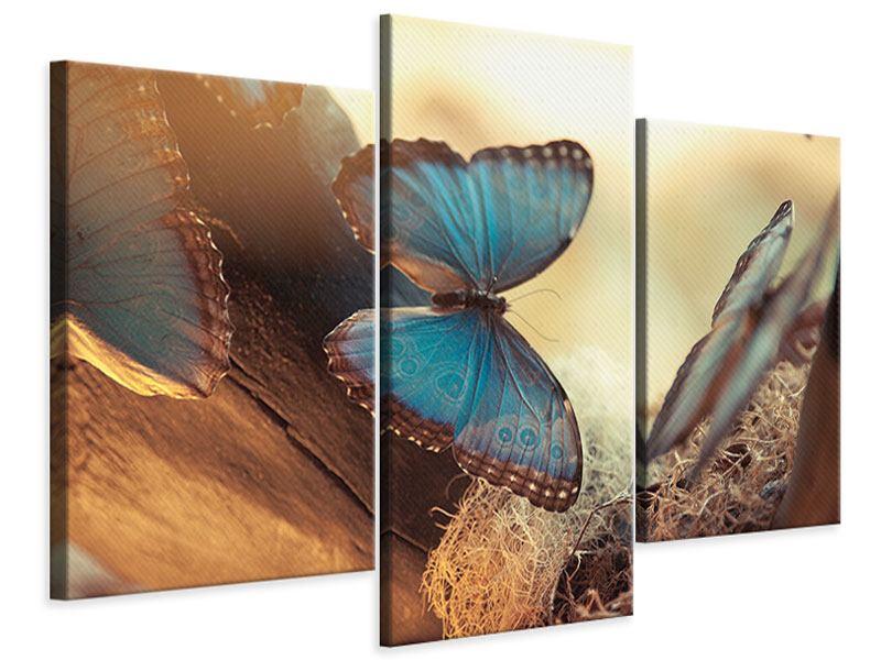 Leinwandbild 3-teilig modern Schmetterlinge