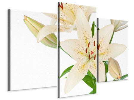 Leinwandbild 3-teilig modern Weisser Lilienstrauch