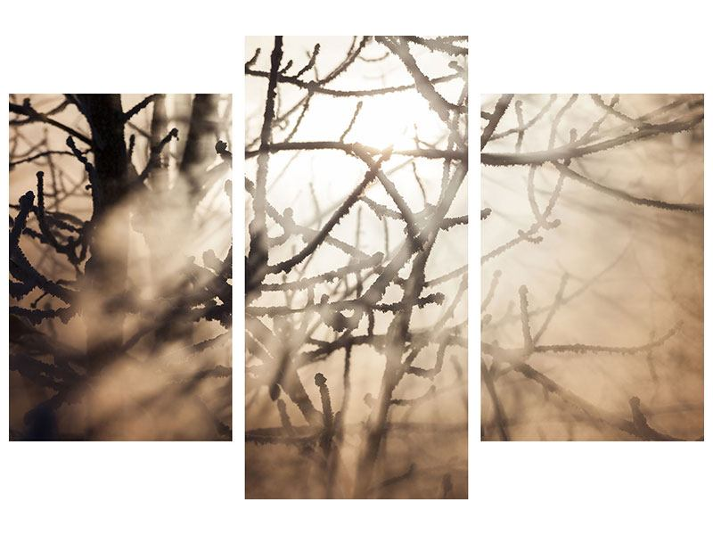 Leinwandbild 3-teilig modern Äste im Schleierlicht