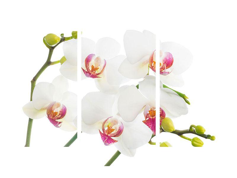 Leinwandbild 3-teilig modern Orchideenliebe