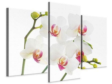orchidee 7 buchstaben