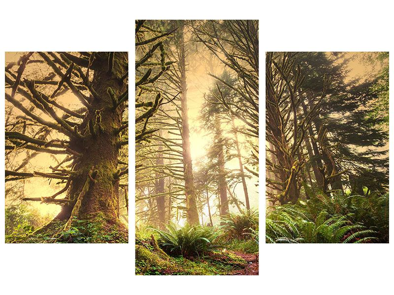 Leinwandbild 3-teilig modern Sonnenuntergang im Dschungel