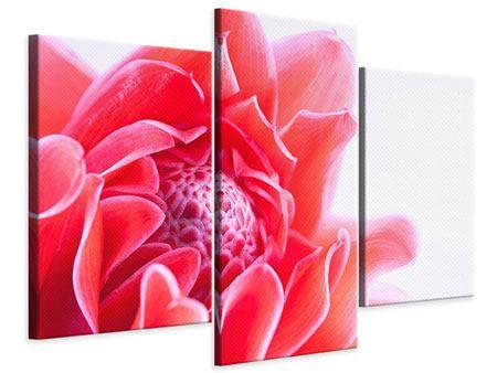 Leinwandbild 3-teilig modern Etlingera XXL