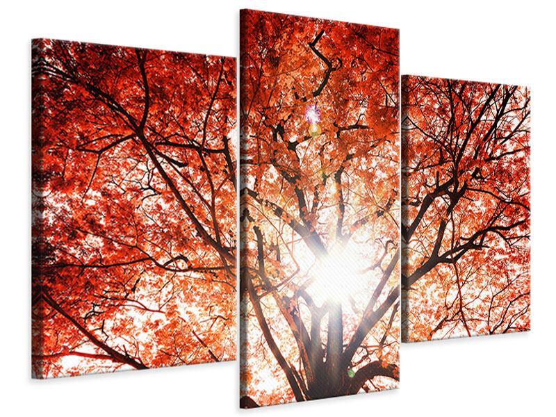 Leinwandbild 3-teilig modern Herbstlicht
