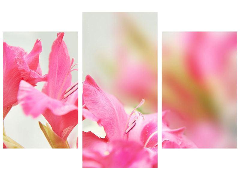 Leinwandbild 3-teilig modern Gladiolen