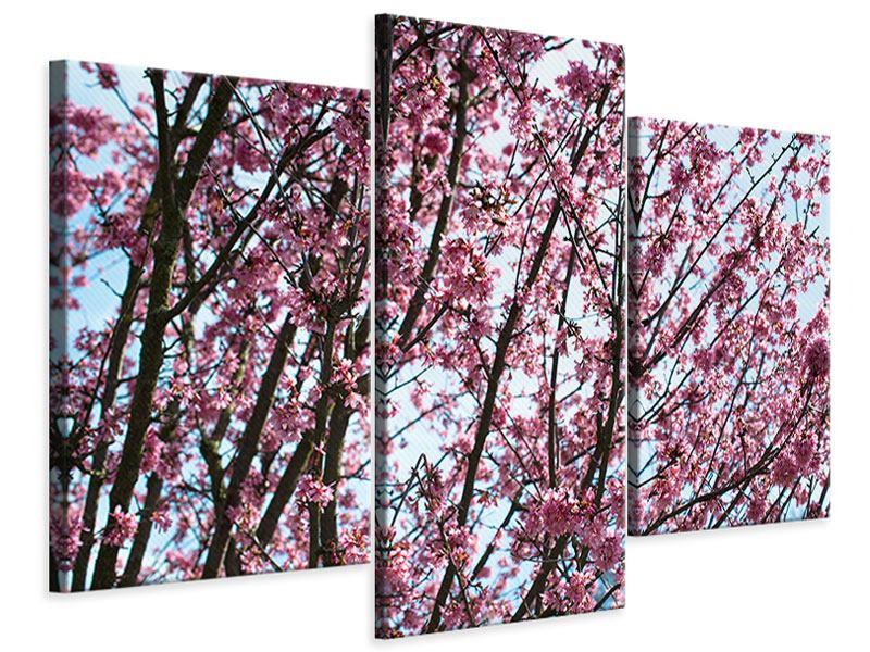 Leinwandbild 3-teilig modern Japanische Blütenkirsche