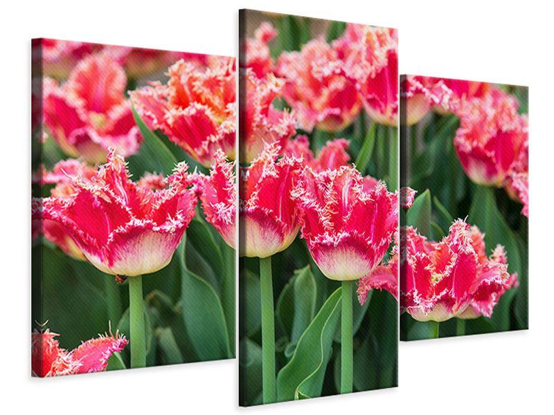 Leinwandbild 3-teilig modern Die Tulpenwiese