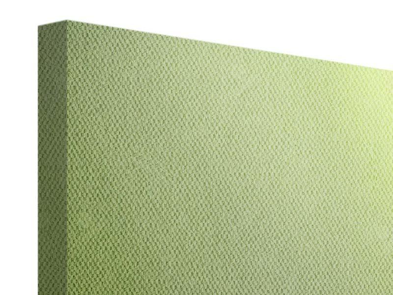 Leinwandbild 3-teilig modern Pusteblume XL im Morgentau