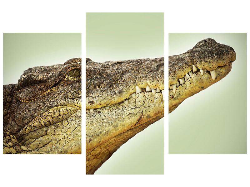 Leinwandbild 3-teilig modern Close Up Alligator