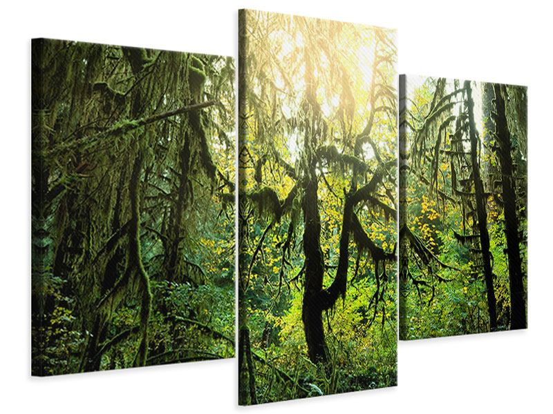 Leinwandbild 3-teilig modern Verträumter Wald