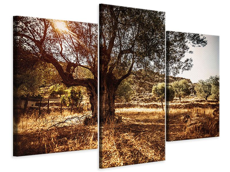 Leinwandbild 3-teilig modern Olivenhain