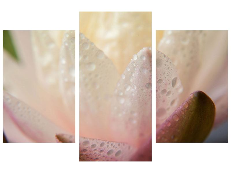 Leinwandbild 3-teilig modern Close Up Seerose