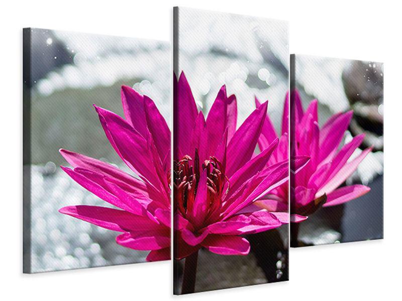 Leinwandbild 3-teilig modern Seerosenduo in Pink