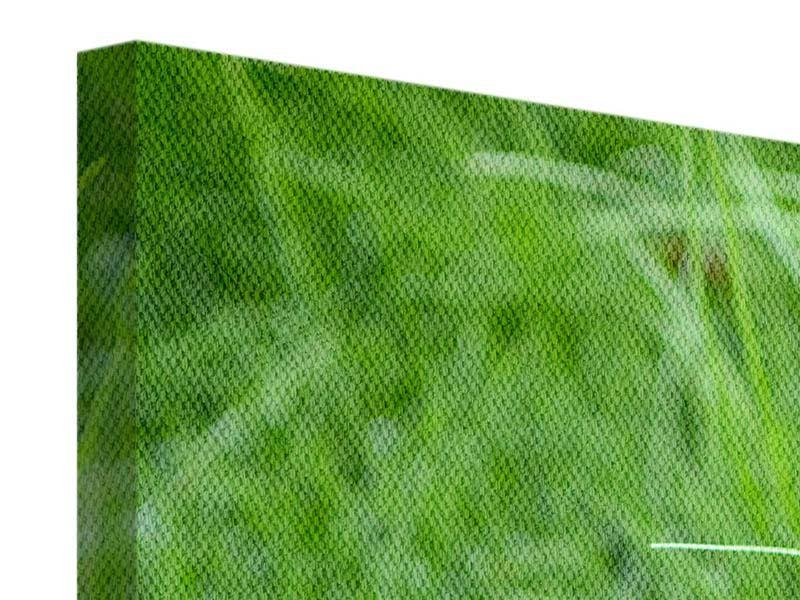 Leinwandbild 3-teilig modern Grashalme