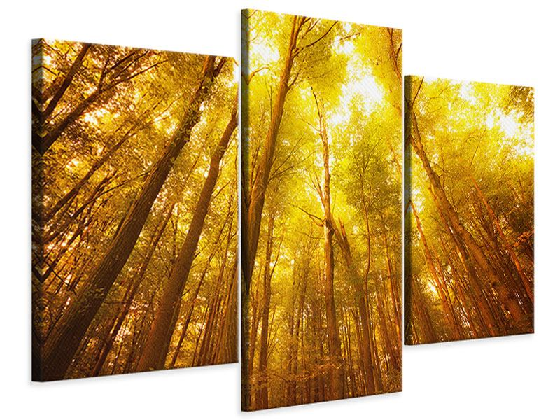 Leinwandbild 3-teilig modern Herbstwald