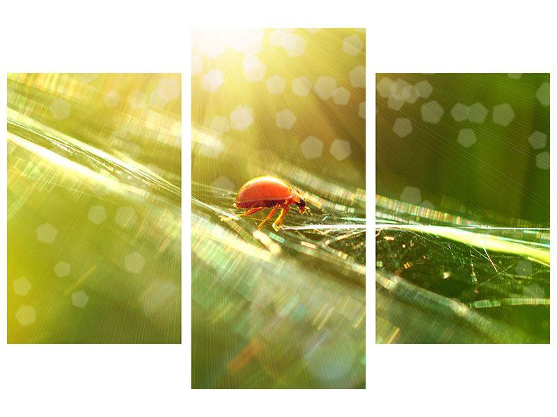 Leinwandbild 3-teilig modern Marienkäfer im Sonnenlicht