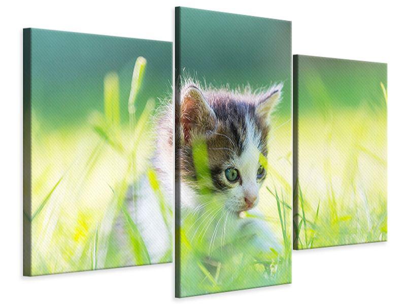 Leinwandbild 3-teilig modern Kitten