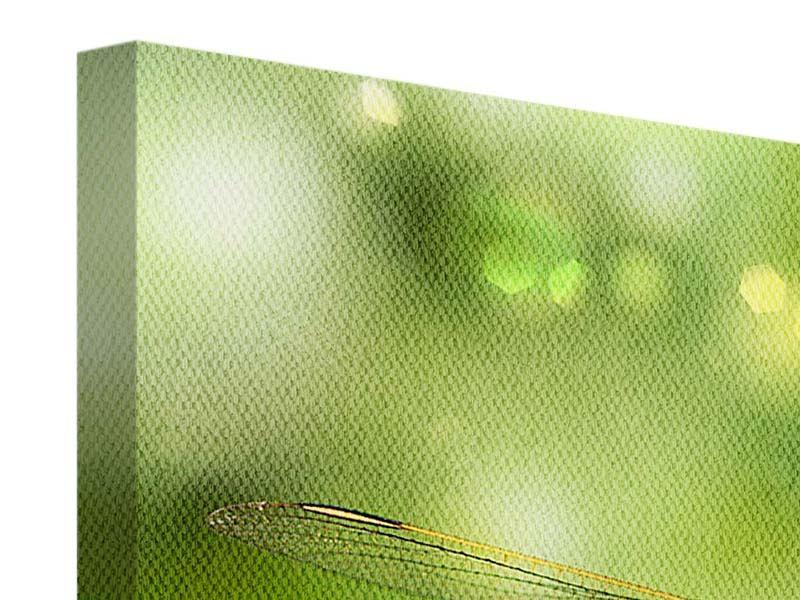 Leinwandbild 3-teilig modern XXL-Libelle