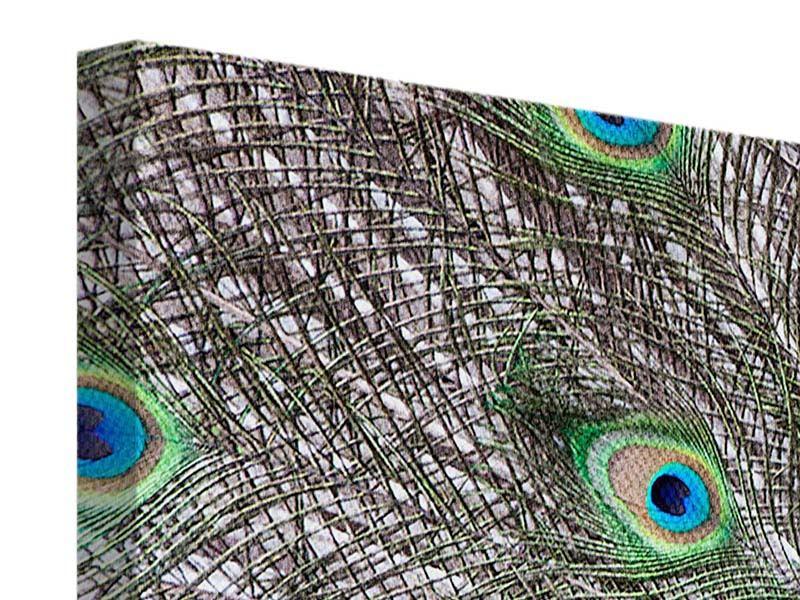 Leinwandbild 3-teilig modern Blauer Pfau